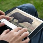 View Individual Bull Videos